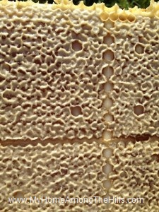 Close-up of a frame of capped honey