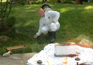 Catching a swarm of bees!