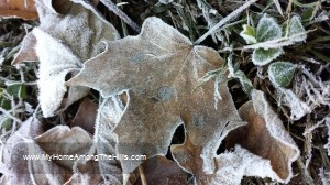 Pretty frost-covered leaf